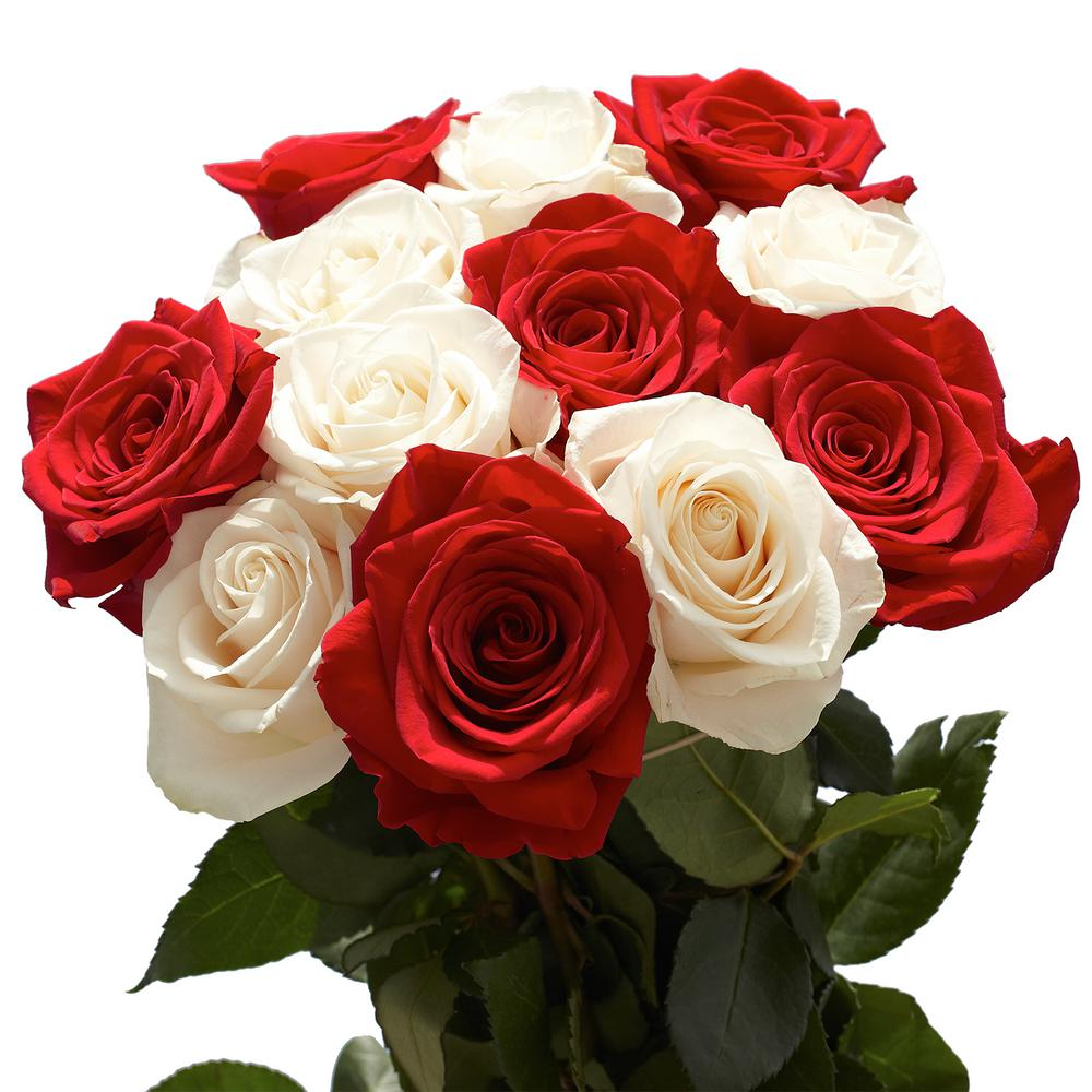 50 Stems of Roses 25 Red and 25 White