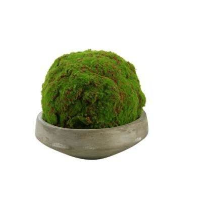 Indoor Large Moss Ball in Round Concrete Bowl