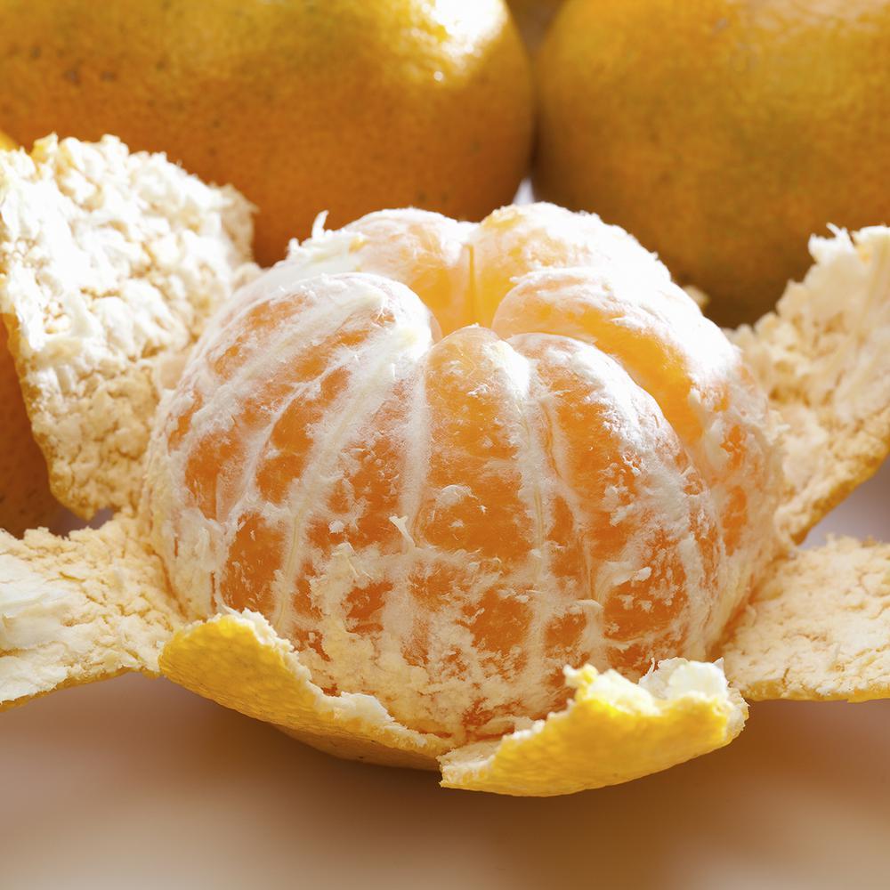 Mandarin Citrus Tree -  Kishu Seedless Mandarin - 1 Plant