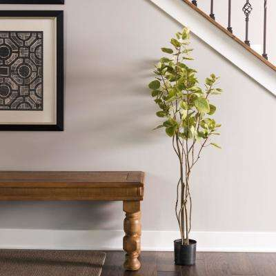 4 ft. Cotinus Coggygria Tree with Pot-Green