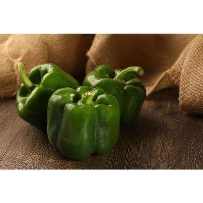 4.25 in. Grande Proven Selections Bell Boy Pepper Live Plant Vegetable (Pack of 4)