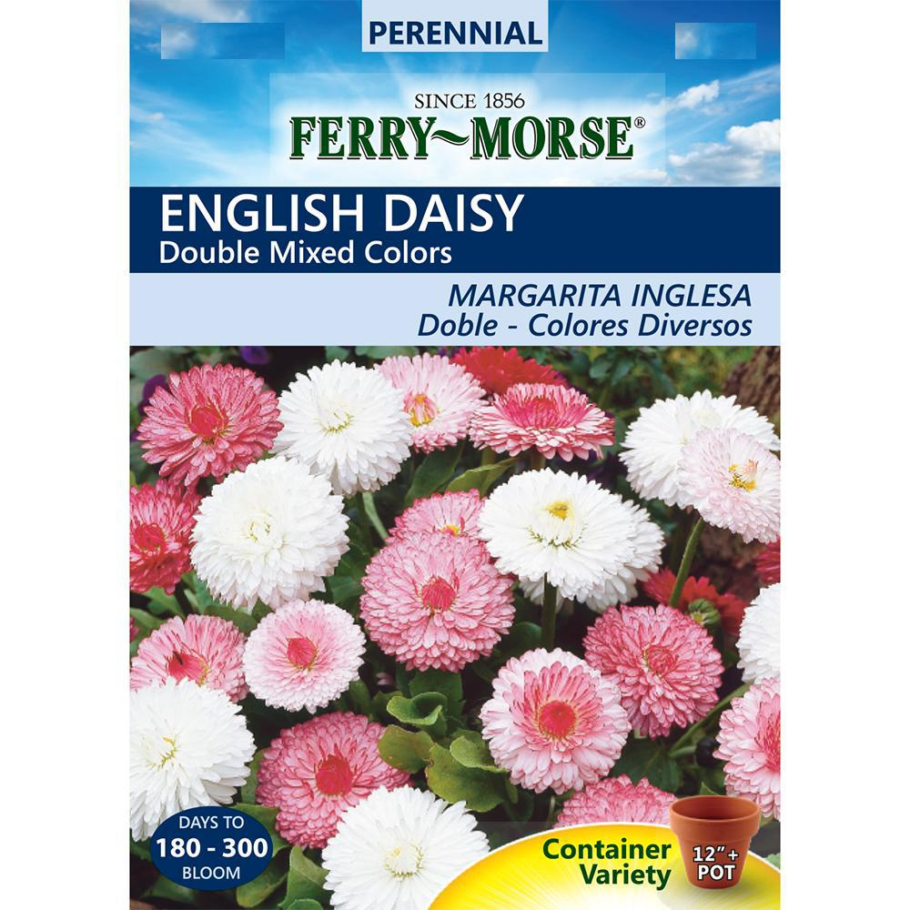 Ferry Morse English Daisy Double Mixed Colors Seed 5252 The Home Depot