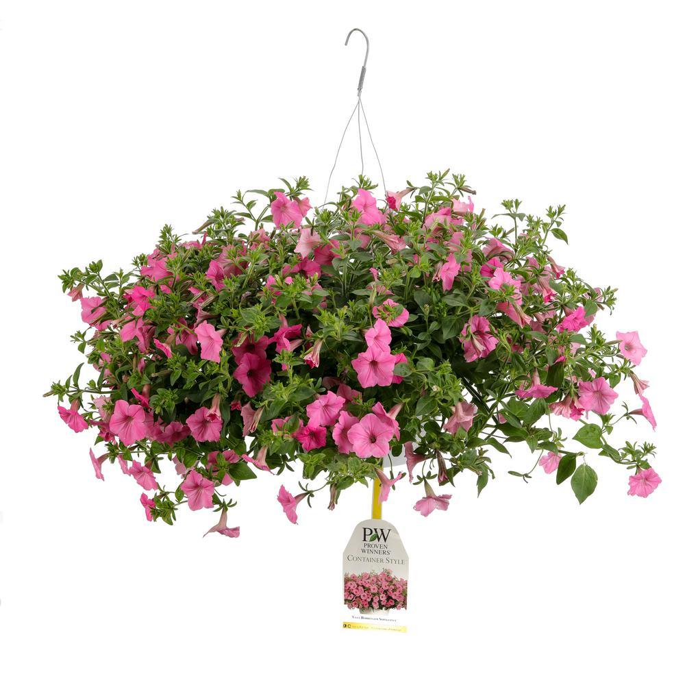 ProvenWinners Proven Winners 10 in. Supertunia Vista Bubblegum Mono Hanging Basket (Petunia) Live Plant, Pink Flowers