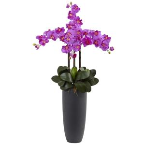 Phalaenopsis Orchid Arrangement with Bullet Planter