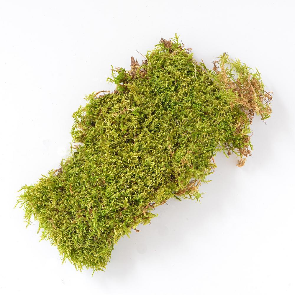 Mosser Lee 325 Sq In Sheet Moss Soil Cover