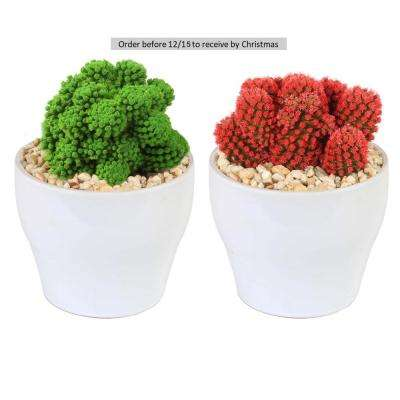 Holiday Live Desert Gems Cacti in 4 in. White Euro Ceramic Grower's Choice in Red or Green (2-Pack)