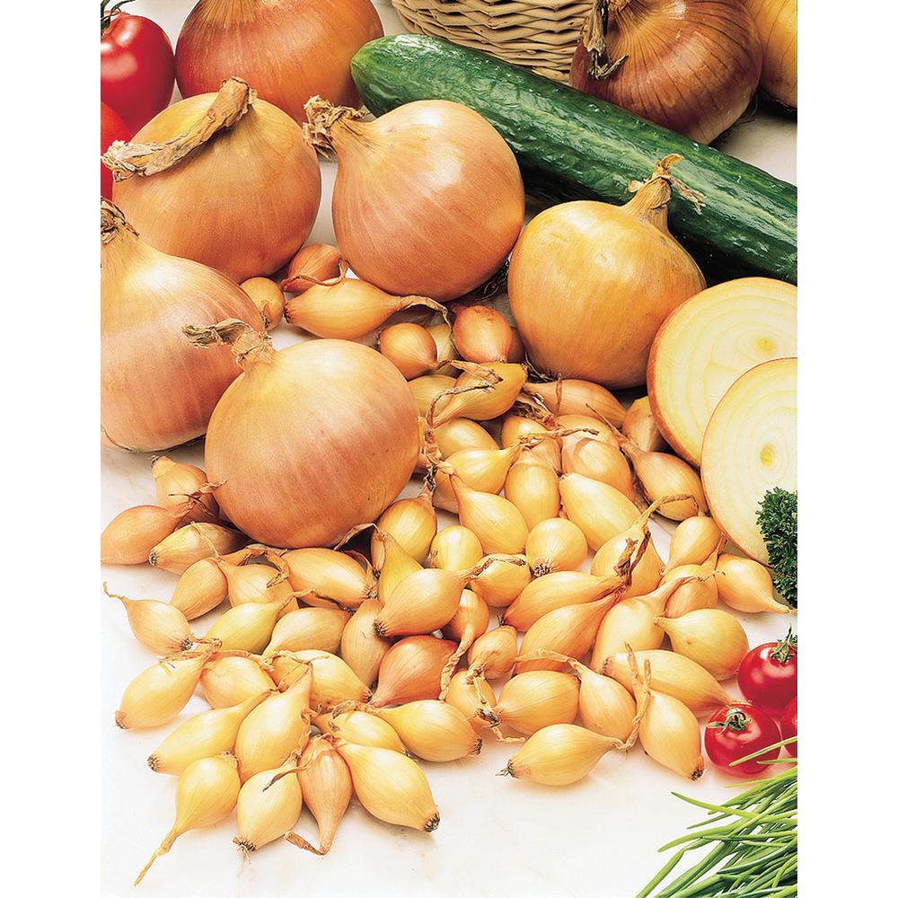 gurney s ebenezer yellow onion set 80 bulbs per package 94683