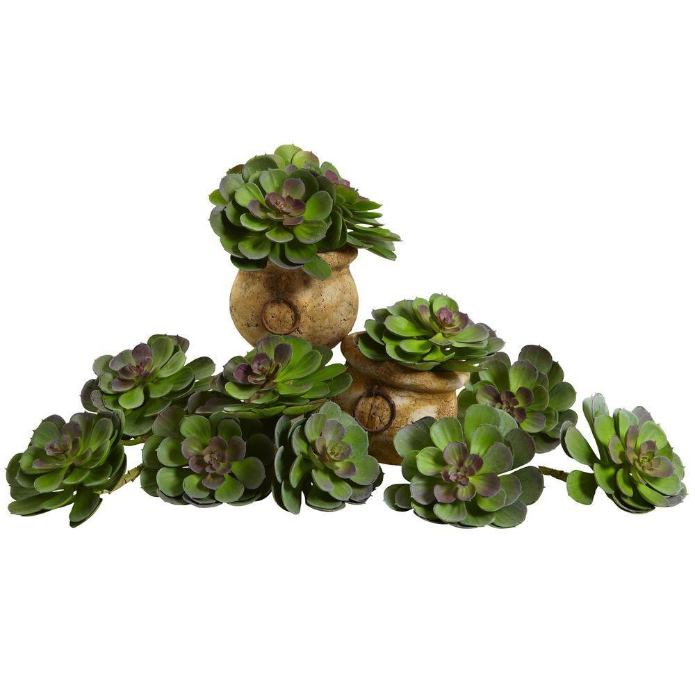6 in. Echeveria Succulent (Set of 12)