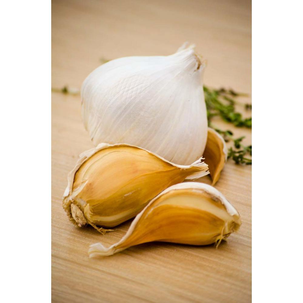 Elephant Garlic Bulbs