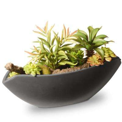 8.6 in. Succulent in Ceramic Pot