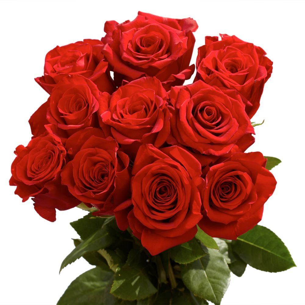Globalrose 2 Dozen Red Roses-vars-2-dozen-red-roses - The Home Depot