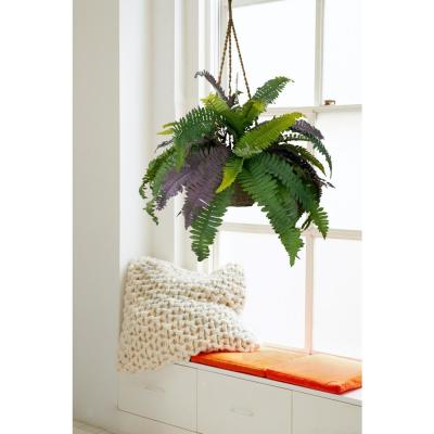 Lush and Green Boston Fern with Basket
