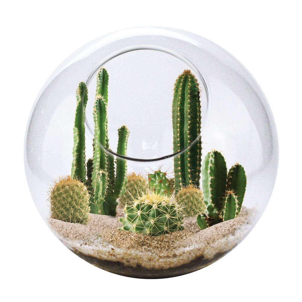 Classic Glass Clear Glass Mini Desertscape Indoor Garden Terrarium Indoor Garden Seed Starter Kit