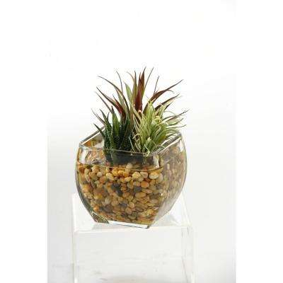 Indoor Aloe and Easter Grass in Glass Cube