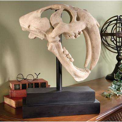 20.5 in. H Saber Toothed Tiger Skull Artifact