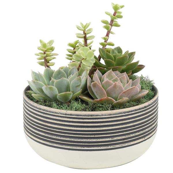 6 in. Bliss Cacti and Succulent Garden in Black and White Dish