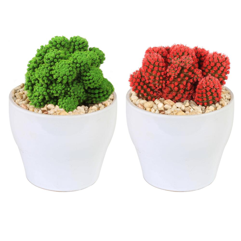 COSTAFARMS Costa Farms Holiday Live Desert Gems Cacti in 4 in. White Euro Ceramic Grower's Choice in Red or Green (2-Pack)
