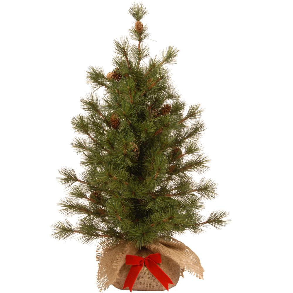 36 in. Bristle Cone Pine Tree