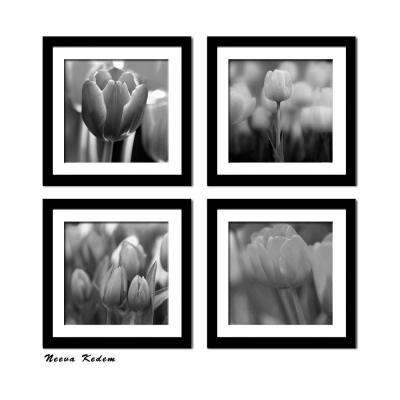"Four 10 in. x 10 in. ""Tulips Beauty"" by Neeva Kedem Framed Printed Wall Art"
