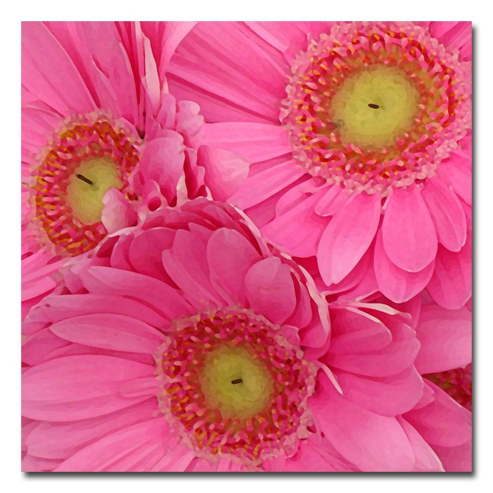 18 in. x 18 in. Pink Gerber Daisies Canvas Art