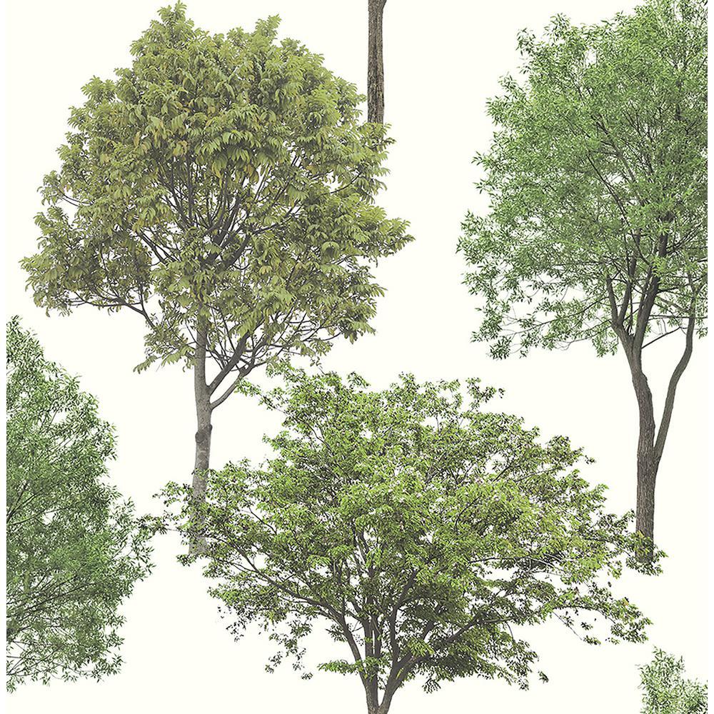 Tree Tops Green Photographic Tree Wallpaper