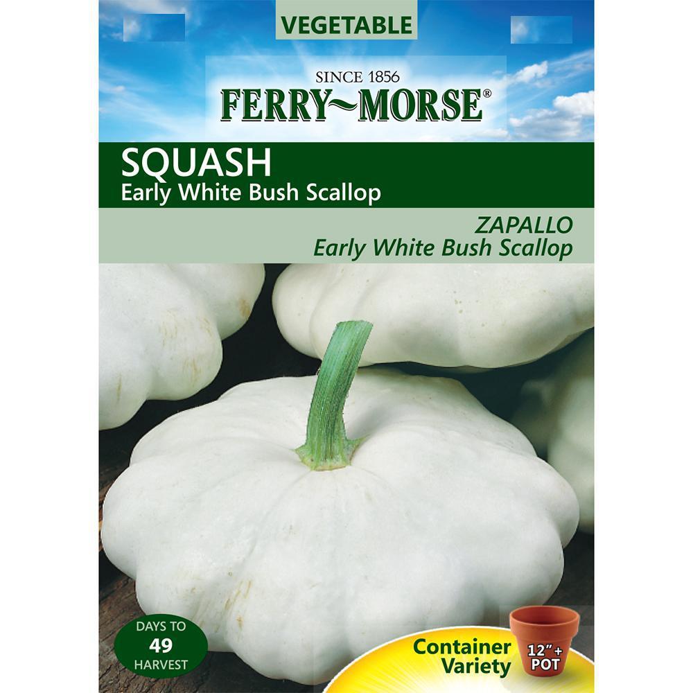 Ferry morse squash early white bush scallop seed 1371 the home depot ferry morse squash early white bush scallop seed mightylinksfo