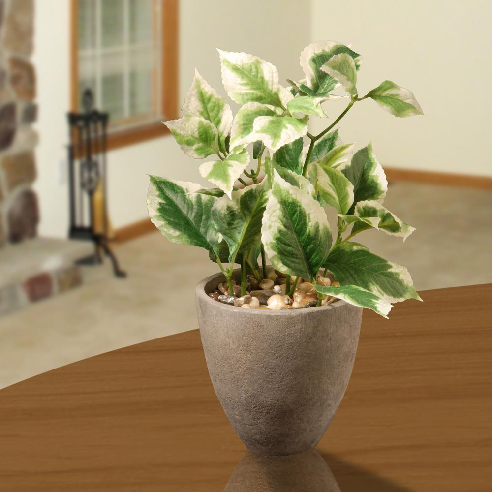11.8 in. Balm Plant in Pot