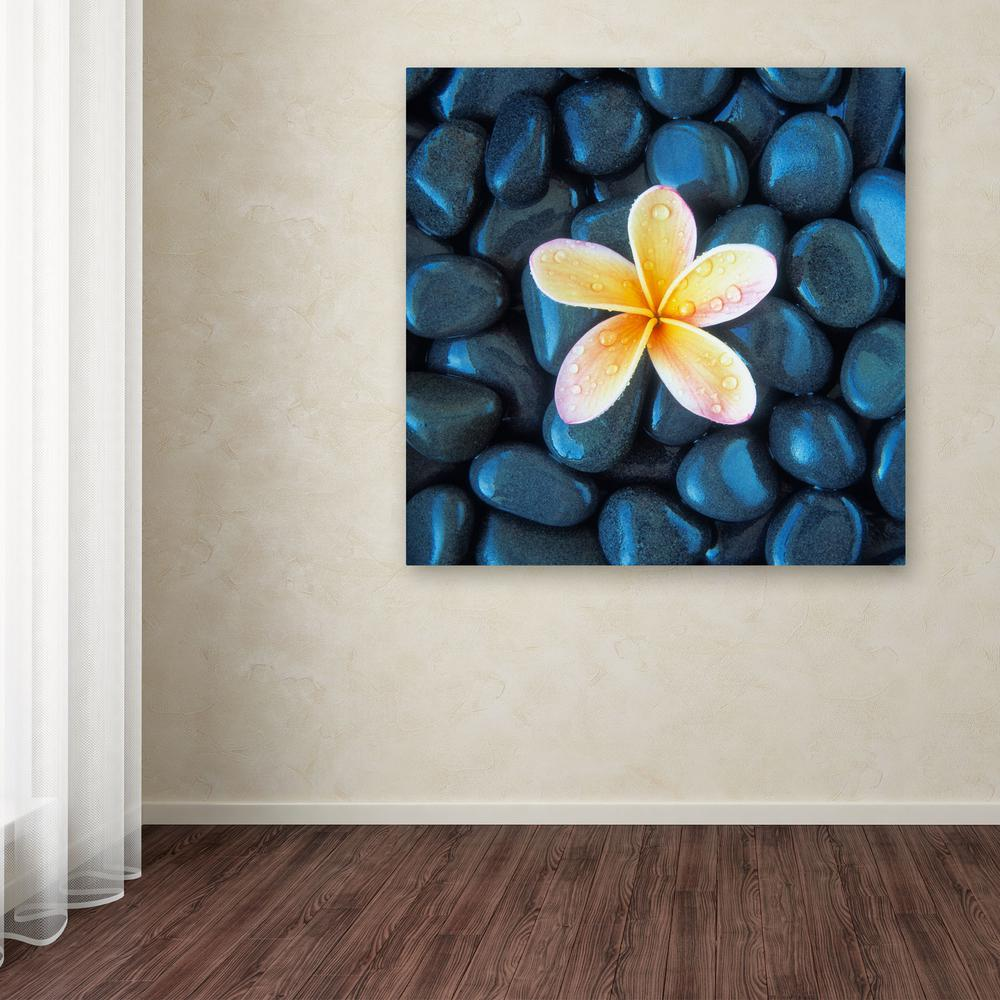 "Trademark 24 in. x 24 in. ""Plumeria and Pebbles 2"" by Dav..."