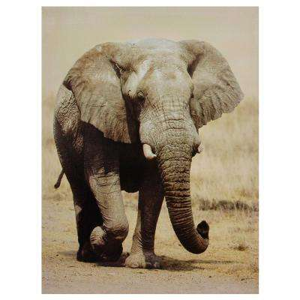 """Oriental Furniture 32 in. x 24 in. """"Walking Elephant"""" Canvas Wall Art"""