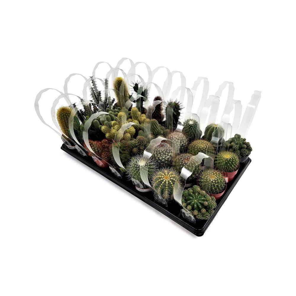 2.5 in. Cactus Mix (28-Plants)