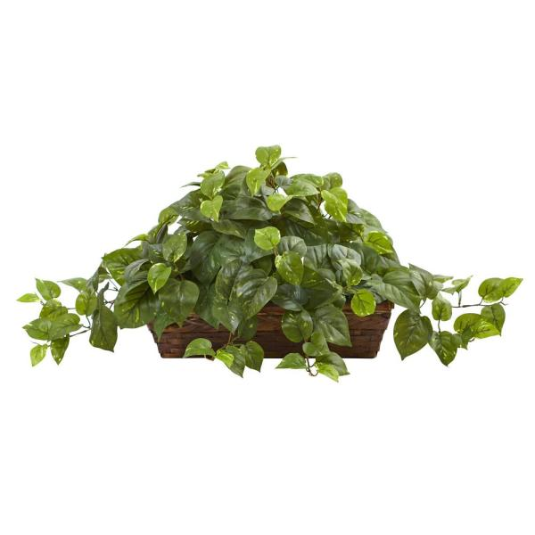 15 in. Pothos with Ledge Basket