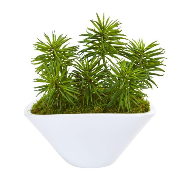 Nearly Natural Indoor Succulent Garden Artificial Plant In Oval