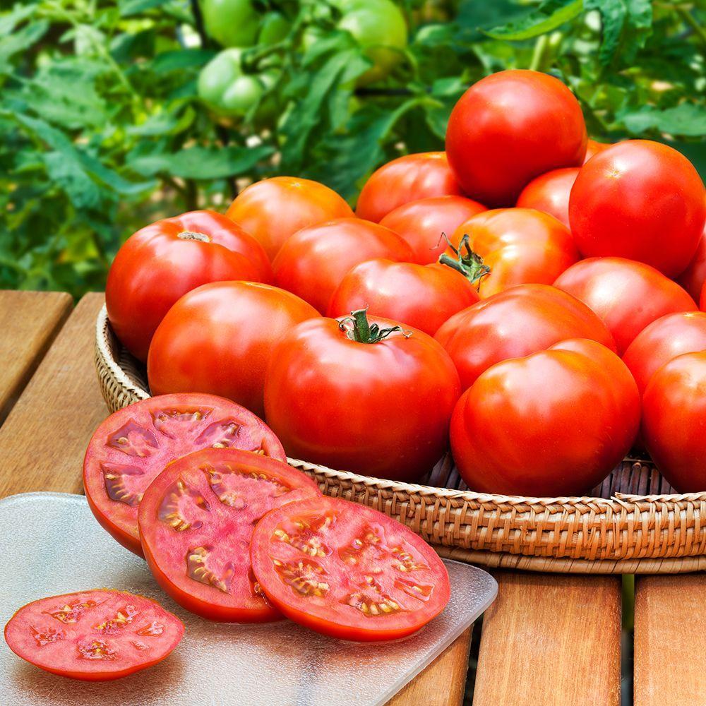 Bonnie Plants 4.5 in. Heinz Classic Heirloom Tomato