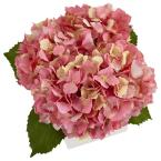 Nearly Natural 9.5 in. Hydrangea in New Baby Ceramic in Pink