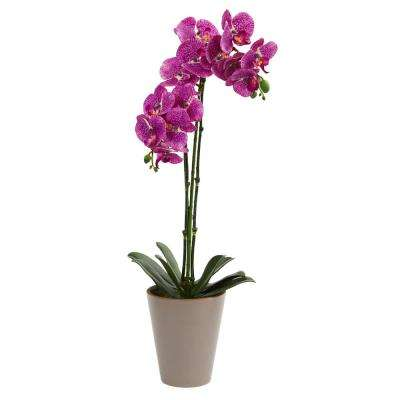 24 in. Speckled Phalaenopsis Orchid Artificial Arrangement
