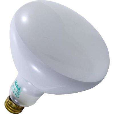 Halco 255-Watt Halogen 400-Watt Equivalent R40 Flood Specialty Pool Spa Replacement Light Bulb (1-Bulb) 75007