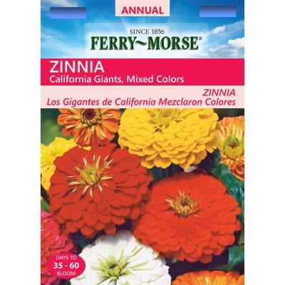 Zinnia State Fair Giant Mixed Colors Seed