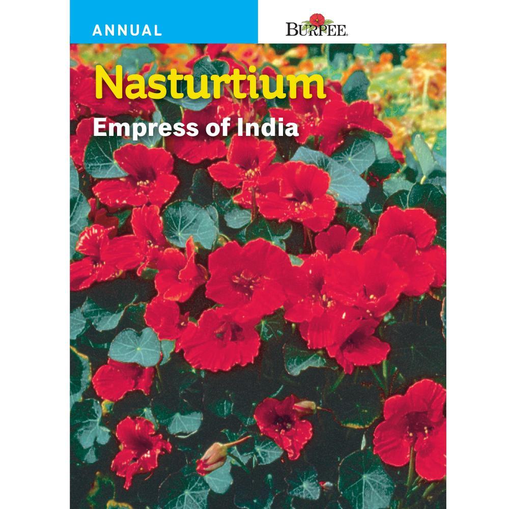Nasturtium Empress of India Seed
