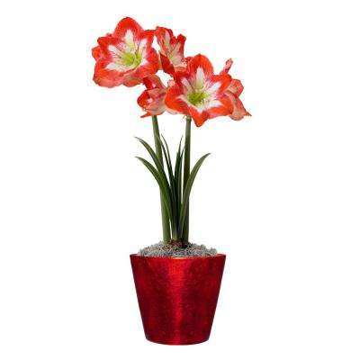 7.5 in. Red Amaryllis Minerva Bulb Grow Kit with Ceramic Planter