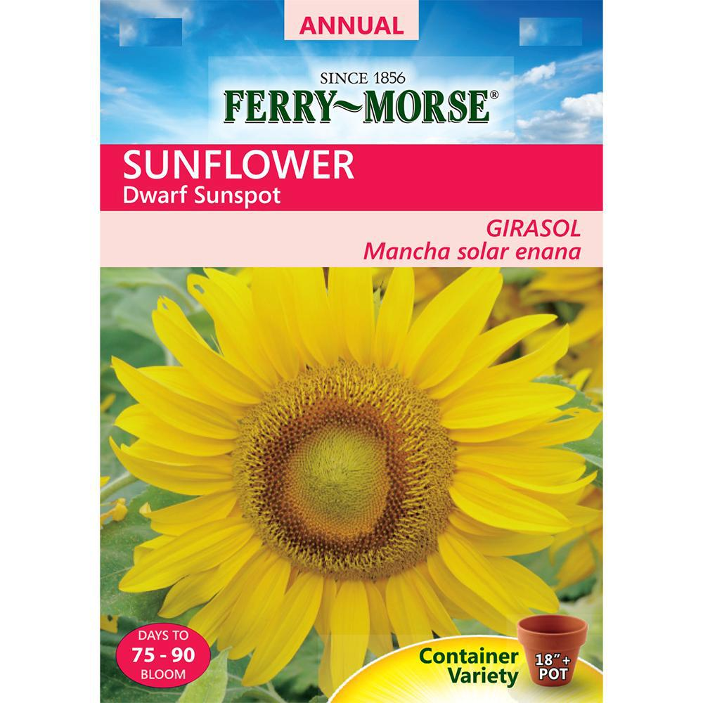 Ferry Morse Sunspot Dwarf Sunflower