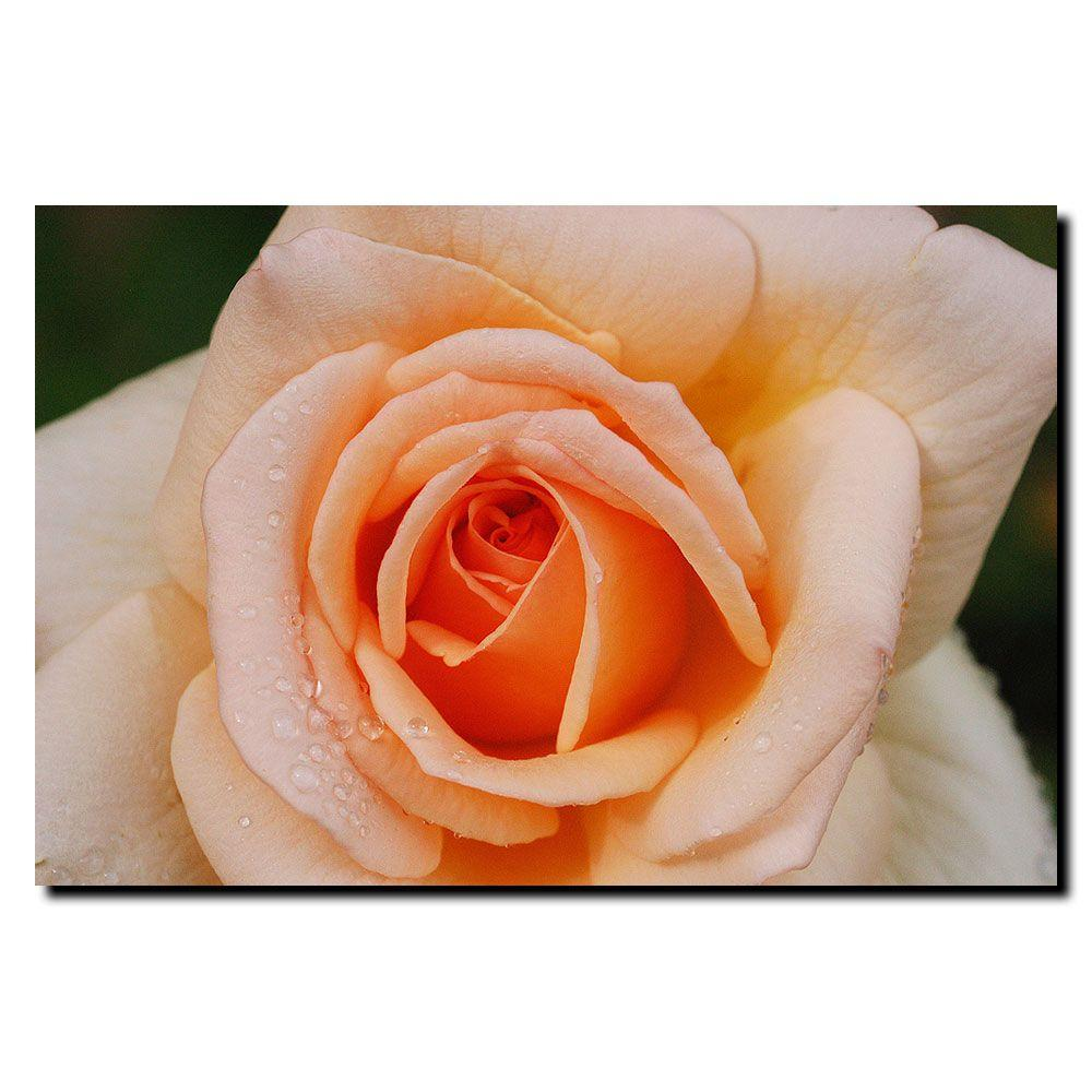 16 in. x 24 in. Early Morning Rose Canvas Art