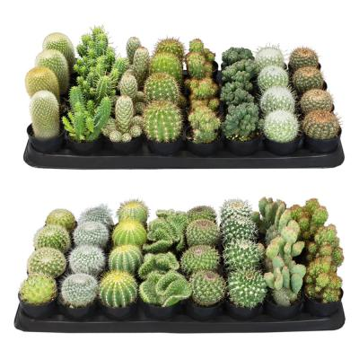2.5 in. Cactus Plant Collection (64-Pack)