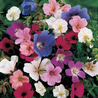 Hardy Geranium Mixture, Live Bareroot Plant, Red, White, Pink, and Purple Flowering Perennial (10-Pack)