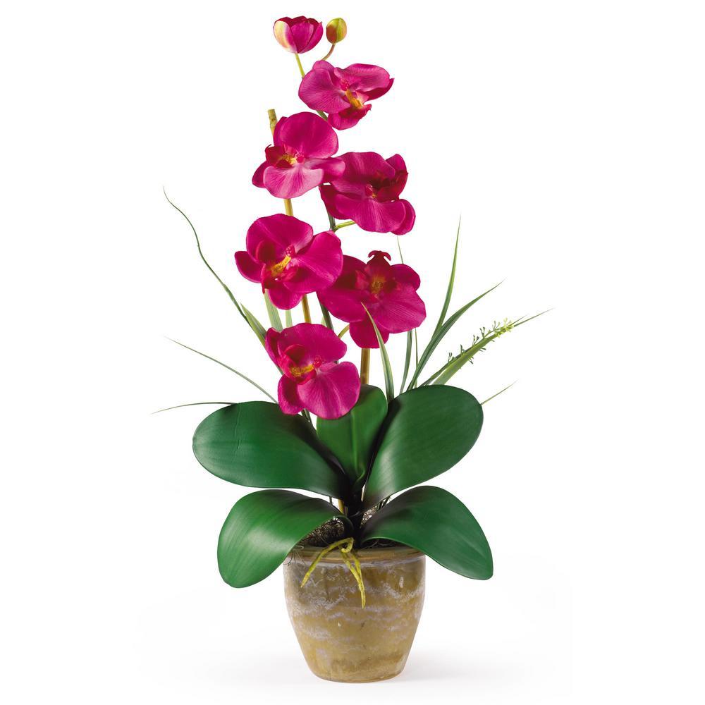 21 in. Phalaenopsis Silk Orchid Flower Arrangement in Beauty