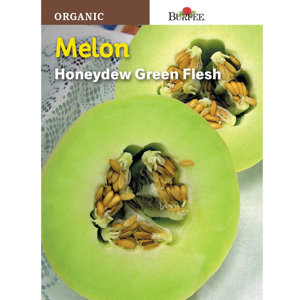 Melon Honey Green Flesh Organic Seed