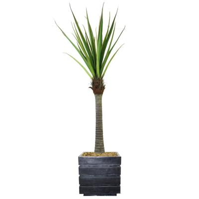 78 in. Real touch agave in Fiberstone Planter