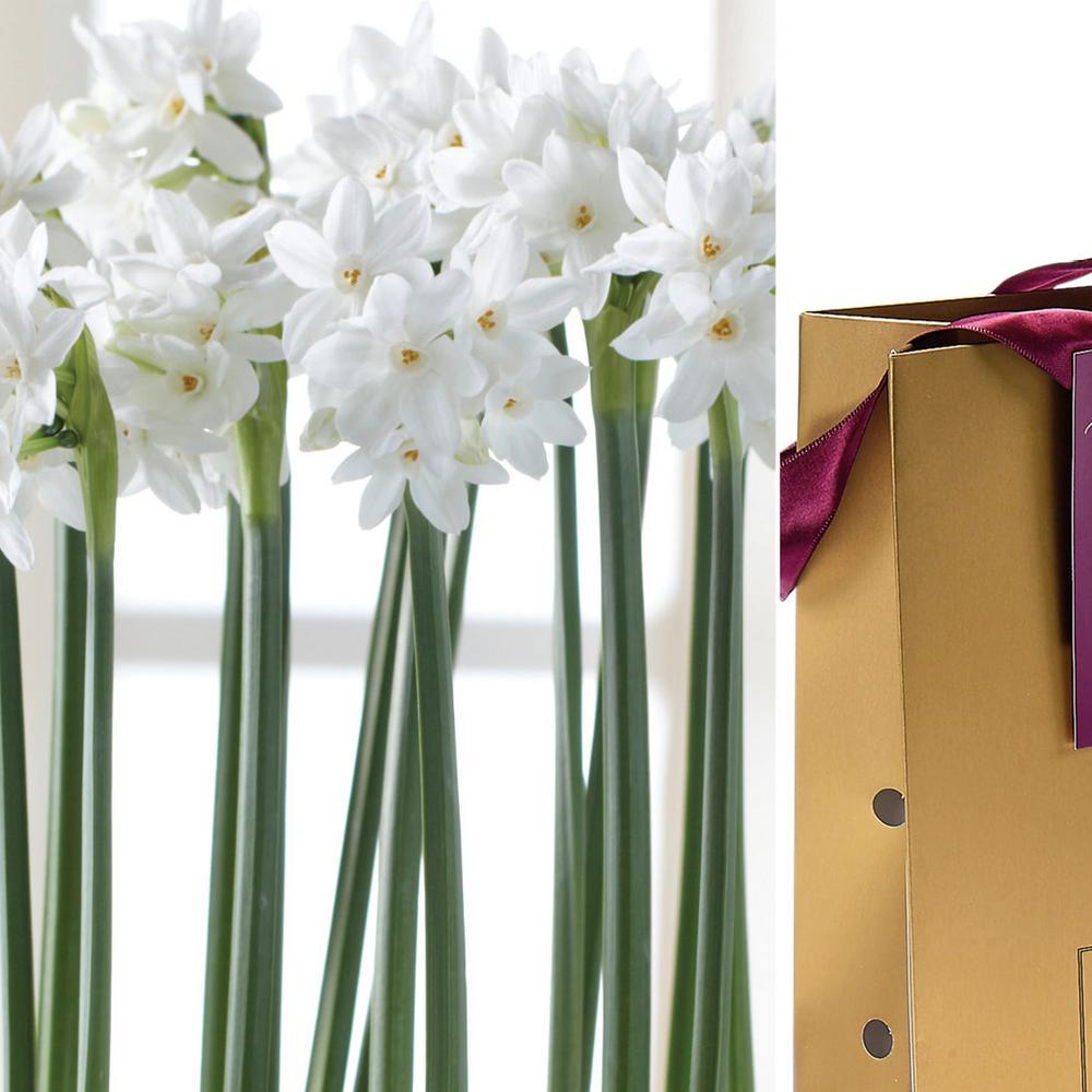 Paperwhite Bulb In Gold Gift Bag 6 Bulbs