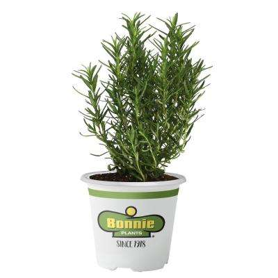 Herb Plants Edible Garden The Home Depot