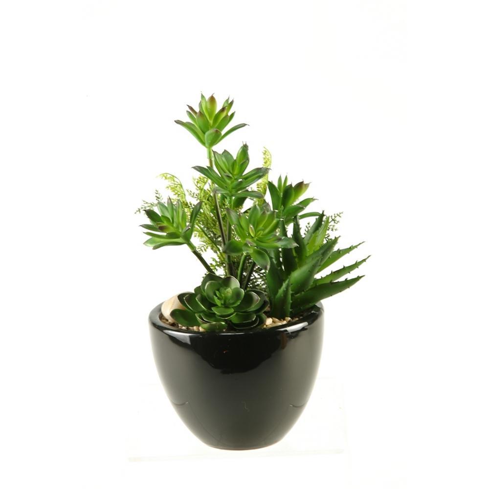 Indoor Mini Dracaena, Aloe and Echeveria in Round Ceramic Planter