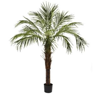 pottery at home depot, palm tree plants for homes, palm trees target, pine at home depot, palm trees at kmart, grapes at home depot, palm trees at lowes, palm plant home depot, herbs at home depot, signs at home depot, tiki bar at home depot, houses at home depot, water at home depot, palm trees at costco, evergreen shrubs at home depot, food at home depot, magnolia tree at home depot, eucalyptus tree at home depot, palm tree fertilizer home depot, on palm tree at home depot plants